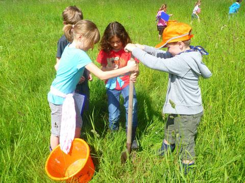 So einfach ist es gar nicht, ein Stück Boden aus der Wiese auszustechen, das merkten Anna-Maria und ihre Mitschüler ganz schnell.