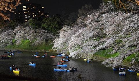 千鳥ヶ淵の夜桜。ボートのカップルだらけで激混み。衝突音があちらこちらで。。