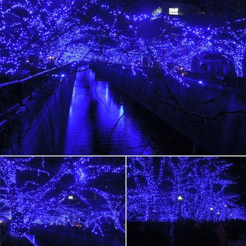 中目黒川にかかる「青の洞窟」。もう海外に行く必要はないかも。