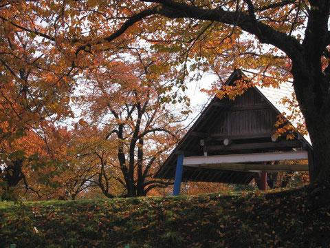 相撲道場 桜紅葉相撲道場を埋める(高田公園)