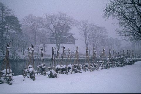 冬の高田公園  雪降りしきる静かな公園
