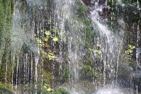 初夏 滝の流れが回りを潤す