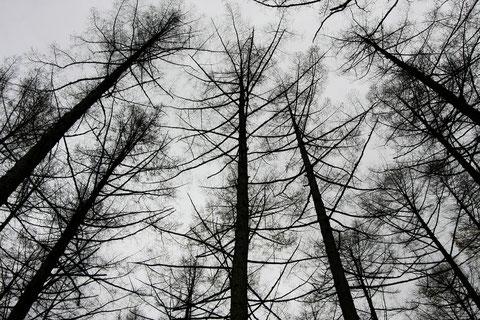 木立の作品 冬を待つ山里