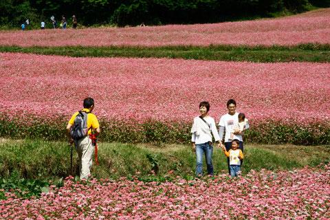 休日 赤蕎麦畑,花は綺麗 味覚は楽しみ