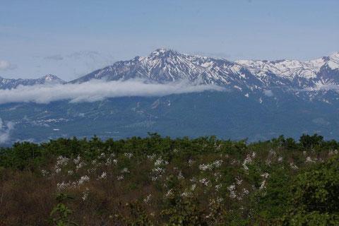 妙高山 こぶしの花咲く丘越えて妙高を久しぶりに望む