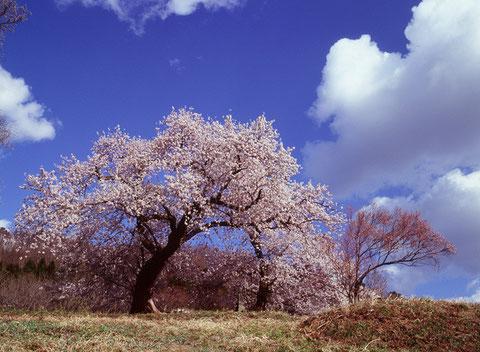 写ッセ準大賞 No.50695 青空に咲く 竹田直樹