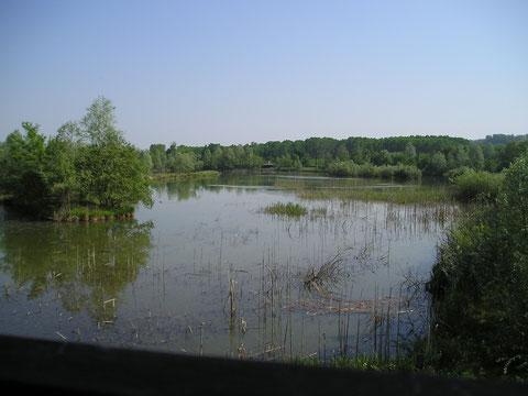 Veduta dell'oasi (Foto P. Caroni)