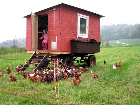 Mobiler Hühnerstall 1