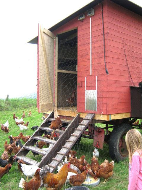 Mobiles Hühnerhaus 2