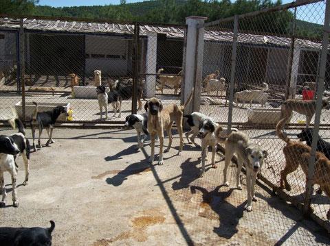 TESSA e.V., Yenifoça, TESSA e.V., Nilgün Karsilayan, Tierschutz Türkei, Tierhilfe- Foca