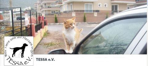 TESSA bei Facebook