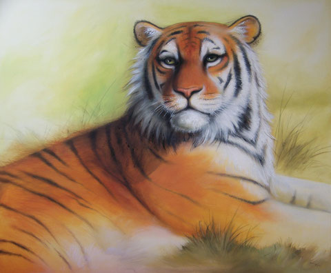 Tiger 100 x120 cm