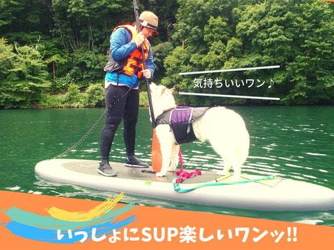 愛犬と一緒にSUP体験ができるサップツアー