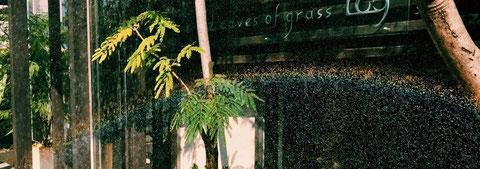リーブズオブグラス Leaves of grass