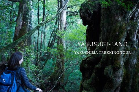 ヤクスギランドツアー,屋久島ガイド,屋久杉,巨木,苔の聖地,はじめての屋久島