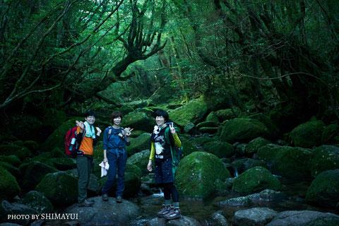 白谷雲水峡,もののけの森,もののけ姫の森,苔むす森,ナイトツアー,キャンプ,早朝