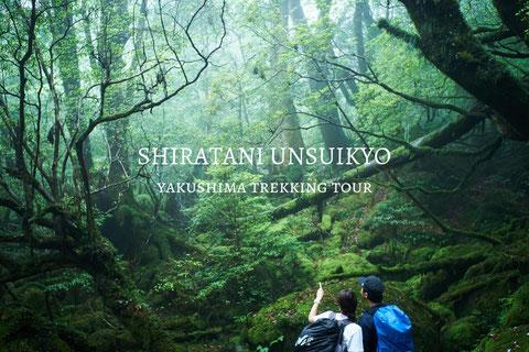 白谷雲水峡(苔むす森と太鼓岩)ツアー,屋久島ガイド,もののけの森,苔の聖地,ガイドなし