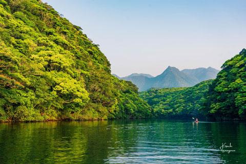 屋久島カヤックツアー,半日ツアー,半日過ごし方,安房川と新緑