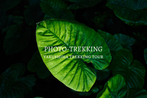 屋久島フォトトレッキング,屋久島ガイド,屋久島写真おすすめスポット,人気スポット,撮影,ミラーレス,