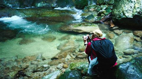 水の透き通る西部林道の沢