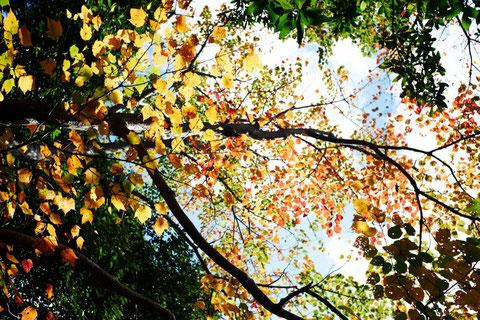 12月の西部林道の森(西部林道ガイドツアー)