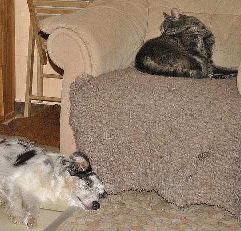 Hier sieht man, dass auch die Hunde (stellvertretend für die anderen Luv) die Anwesenheit des Katers sehr entspannt sehen