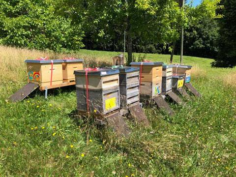Bienenstand für die Bestäubung der Obstbäume