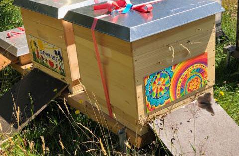 Bienenpatenschaft-Bild