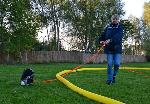 Longieren - auch für kleine Hunde ein großer Spaß!