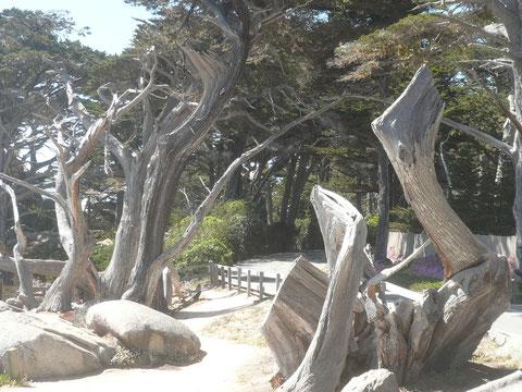 The Ghost Tree (der rechts im Bild)