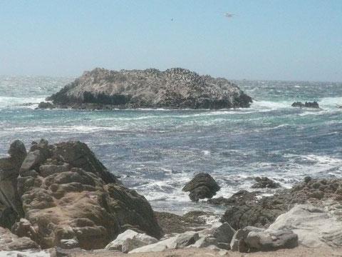 The Bird Rock