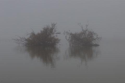 Dortoir dans la brume (sans gorille)