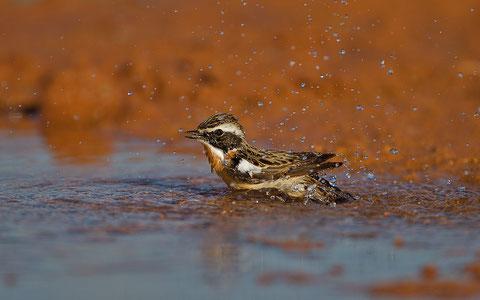L'eau du désert