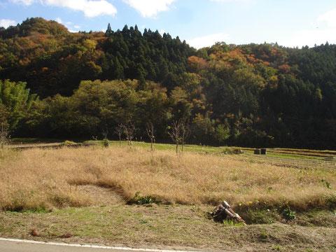 秋の入遠野