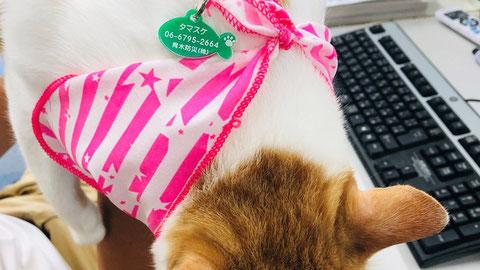 弊猫に装着されたキュートな「迷子札」