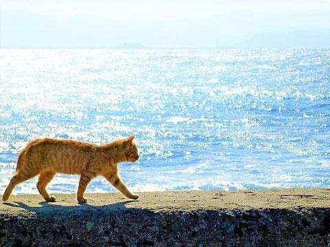 海も消防水利として指定