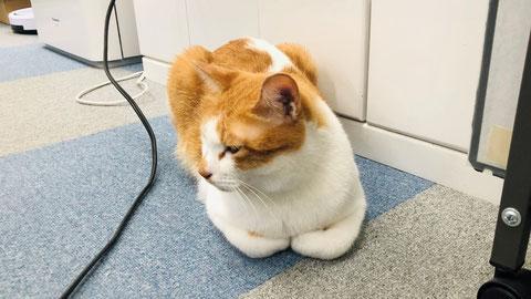 全てを悟ったかのような猫の表情