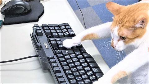 猫の手が空いていれば借りる