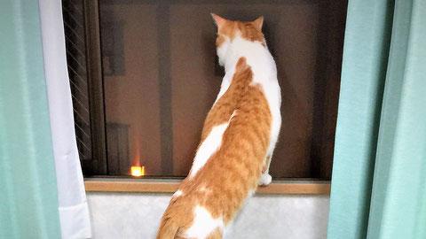 無窓階 消火栓 猫