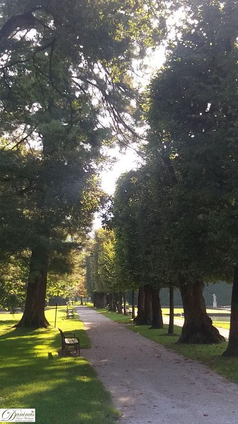 Salzburg, Schlosspark Hellbrunn alte Bäume und Weiher