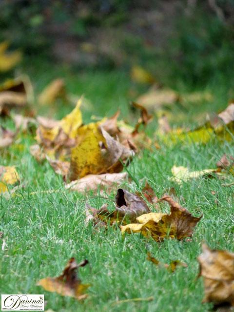 Herbst: Die Bäume werfen ohne Erbarmen ihre Blätter ab