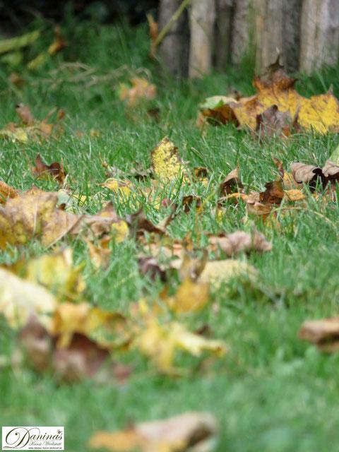 Bunte Herbstblätter auf dem Rasen