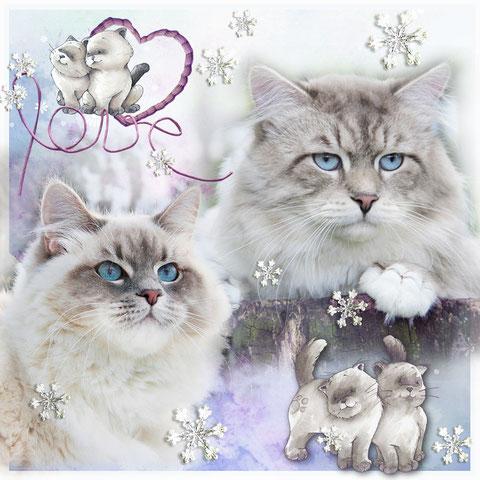 питомник невских маскарадных кошек Лунная Дымка