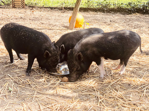 Naomi, Scarlett und Piggeldy