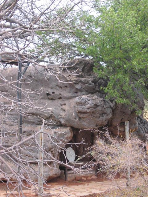 Il baobab-toilet