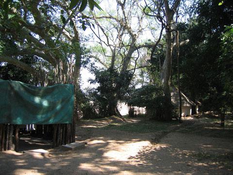 FOTO 2 Campo nella rivierine forest