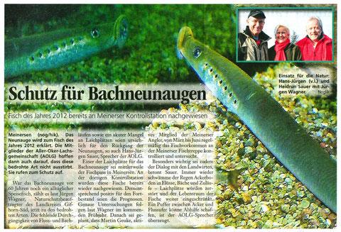Fisch des Jahres 2012: Bachneunauge