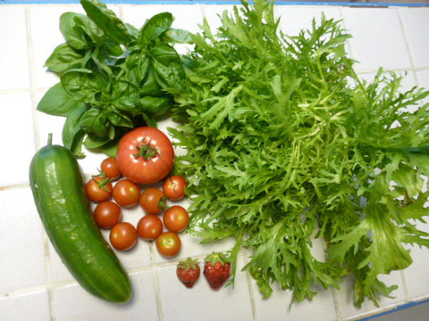 salade frisée-basilic - concombre - tomates - fraises