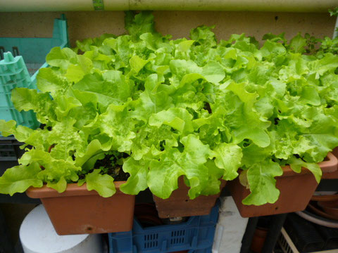salade en jardinière