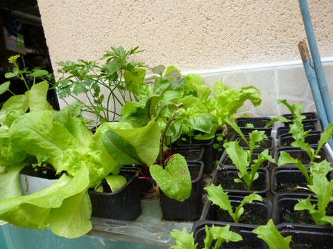 les plants grandissent vite